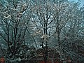 New Jersey Tree After Snowfall.jpg