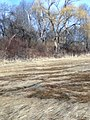 Newbury, MA, USA - panoramio (50).jpg