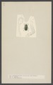 Nitidula - Print - Iconographia Zoologica - Special Collections University of Amsterdam - UBAINV0274 001 03 0014.tif