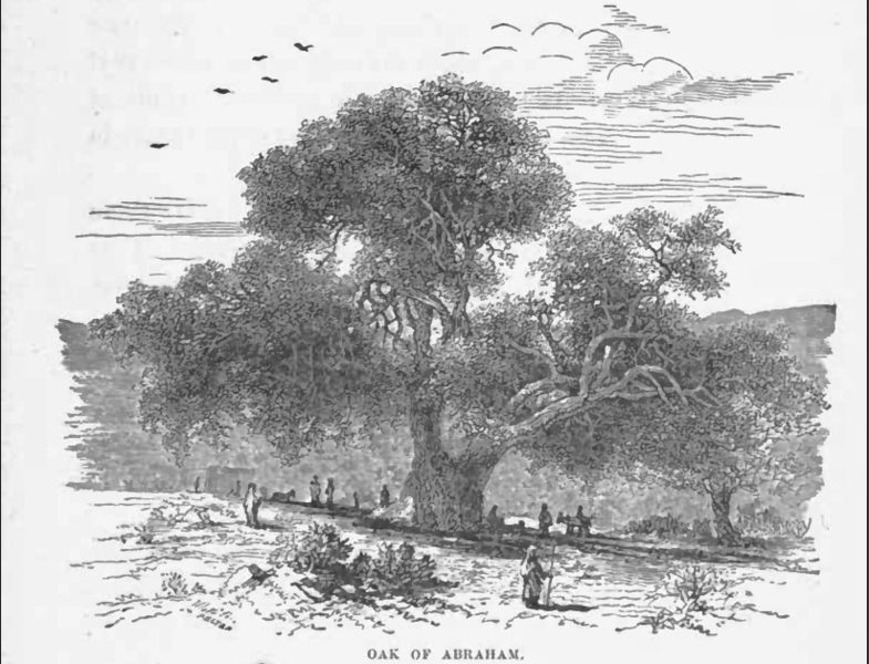http://upload.wikimedia.org/wikipedia/commons/thumb/7/72/Oak_abeaham_1887.jpg/785px-Oak_abeaham_1887.jpg