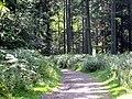Oakenhill Wood - geograph.org.uk - 895180.jpg