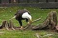 Oaklawn Farm Zoo, May 16 2009 (3538896793).jpg