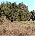 Oakmont Park, Fence 2-17-13 (8536509939).jpg