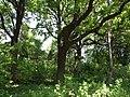 Odessa Main Botanical garden 004.jpg
