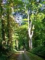 Ognon (60), parc d'Ognon, allée du Mail 02.jpg
