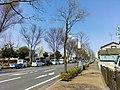 Oizumi-Hanamizuki-Dori-Street-2018032501.jpg