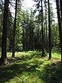 Olšina v Novolhotském lese (004).jpg