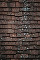 Old roof tiles (Unsplash).jpg