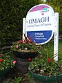 Omagh, County Town of Tyrone sign - geograph.org.uk - 831673.jpg