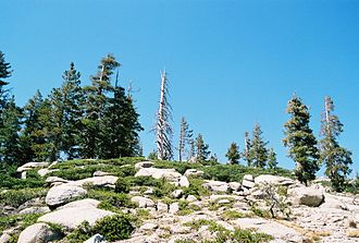 Sierra Nevada subalpine zone - South-facing slope in subalpine zone