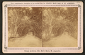 Orange archway, on Mrs. Ball's grove. St. Augustine, from Robert N. Dennis collection of stereoscopic views.png
