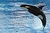 Orca Orlando Seaworld