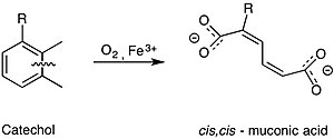 Catechol 1,2-dioxygenase - Figure 1. The overall reaction of catechol 1,2-dioxygenase. Using a non-heme iron(III) complex, 1,2-CTD is able to oxidatively cleave catechol into cis,cis-muconic acid.