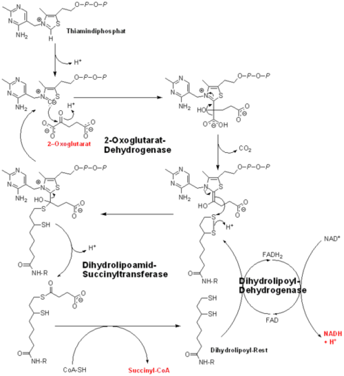 Oxoglutarate dehydrogenase    -Ketoglutarate dehydrogenase Isocitrate To Alpha Ketoglutarate