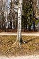 Pörtschach Halbinselpromenade Landspitz Birke im Winter 10012018 2234.jpg