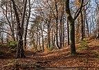 Pörtschach Niedere Gloriette Waldwanderweg 05112017 1885.jpg