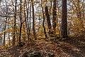 Pörtschach Niedere Gloriette Waldwanderweg 05112017 1886.jpg