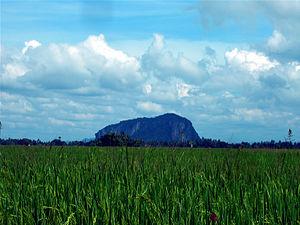 Kedah - A paddy field in Kedah.