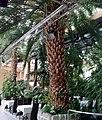 Palmiarnia Zielonogórska - środek12.jpg