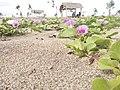 Pantai Bajul Mati.jpg