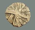 Papyrus Lids from the Embalming Cache of Tutankhamun MET VS09.184.242C.jpeg