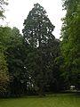 Parc du Château séquoia.JPG