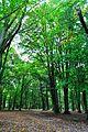 Park w Tychowie (9).JPG