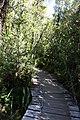 Pasarela sendero El Tepual.jpg