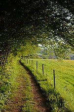 Path (31104241024).jpg