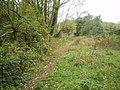 Path in Alder Coppice woods - geograph.org.uk - 1549123.jpg