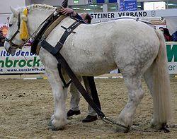 Lijst Van Paardenrassen Wikipedia