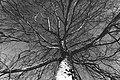 PermaLiv bjørk 03-02-21.jpg
