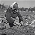 PikiWiki Israel 14785 Golani Nursery.jpg