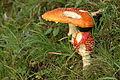 Pilze 2010-09-25-4276.jpg