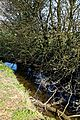 Pincey Brook south from Chelmsford Road, Hatfield Heath, Essex 04.jpg