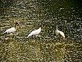 Pinckney Island National Wildlife Refuge (5957937731).jpg