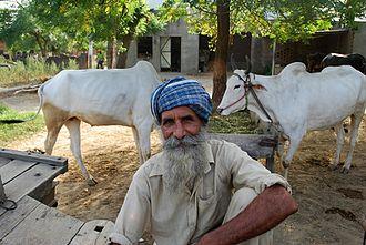 Hoshiarpur district - Sikh farmer in rural Hoshiarpur