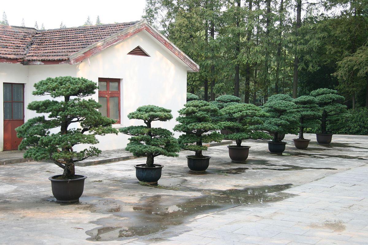 shanghai botanical garden wikipedia