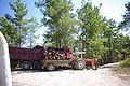 Pinus brutia forestry Taurus Mts.jpg