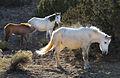 Placitas Free-roaming Horses (8435900466).jpg