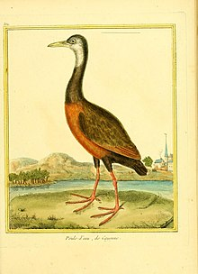 Planches enluminées d'histoire naturelle (9933212185).jpg