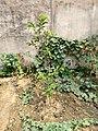 Plants in Sector 28 Faridabad.jpg