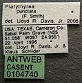 Platythyrea punctata casent0104740 label 1.jpg
