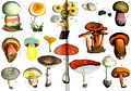 Poisonous and suspicious mushrooms, Otto's Encyclopedia.jpg