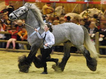 pâture chevaux compiègne