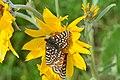 Pollinators0035 (39039110111).jpg