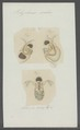 Polyphemus oculus - - Print - Iconographia Zoologica - Special Collections University of Amsterdam - UBAINV0274 099 08 0002.tif