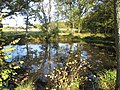 Pond near Wineham, West Sussex.jpg