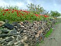 Poppy Bahar 7.jpg