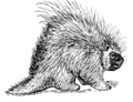 Porcupine (PSF).png